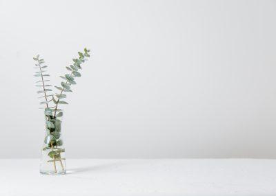 plantwhite